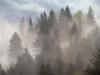 Буковинські Карпати