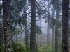 My Carpathians © Igor Melika