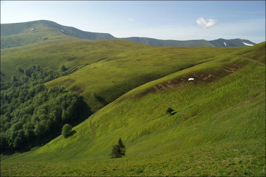 Афинові плантації на схилах г. Великий Верх