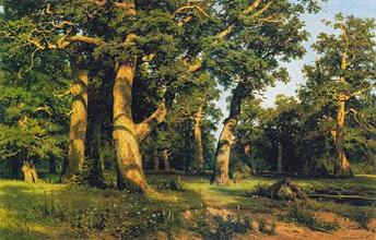"""Білі гриби зростають в усіх лісах Європи. Їх можна надибати і у дібровах, таких, як на картині І. Шишкіна """"Дубовий гай"""""""