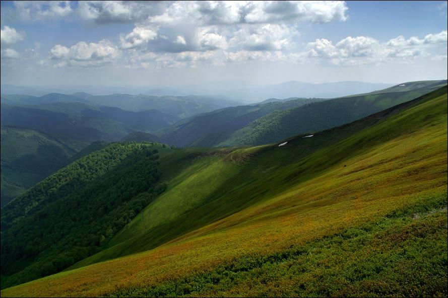 Яфинові плантації на Боржавському хребті