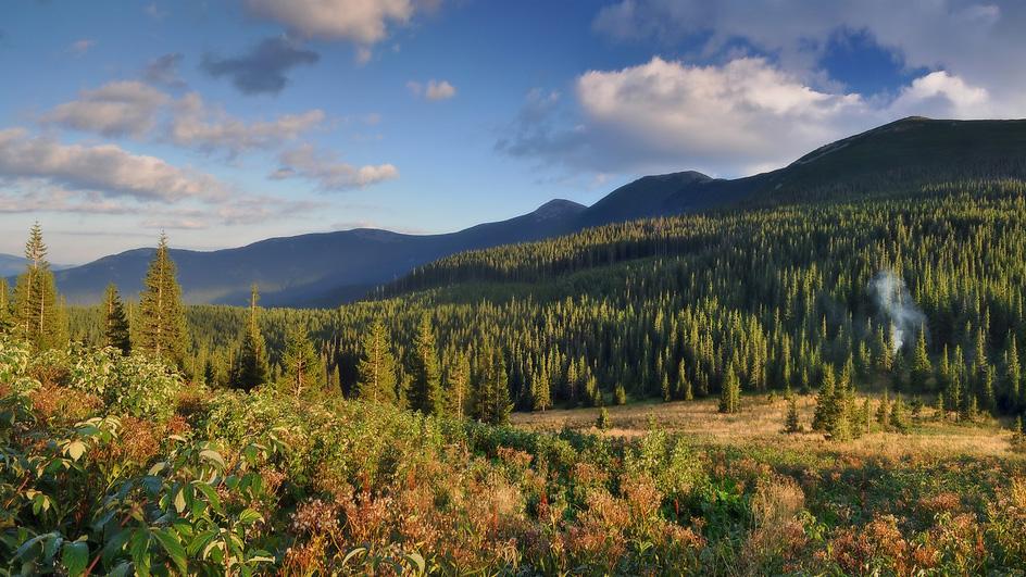 Перевал Боревка (полонина Погар) - 1330 м над р.м.