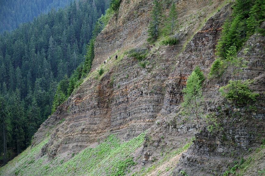 На стрімких схилах урвища пасуться кози