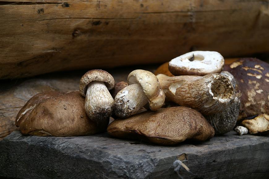 Гуцули збирають тільки білий гриб