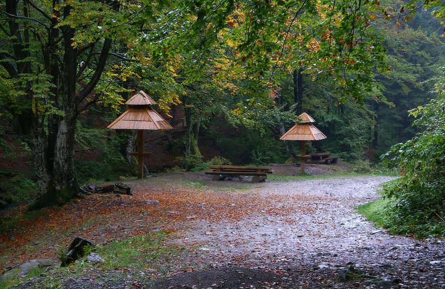 Картинки по запросу осінній дощ у карпатах