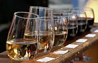 Фестиваль вина у Берегові 2011