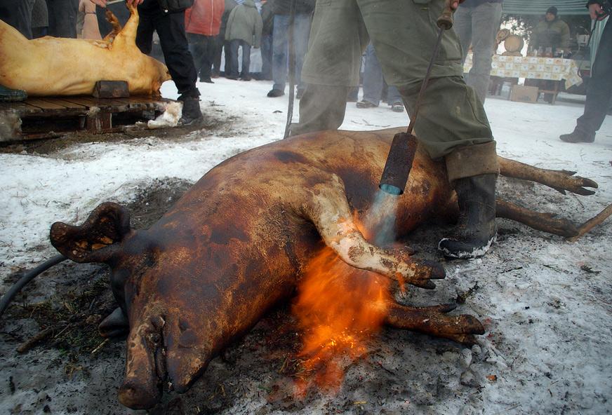 Обпалювання свині