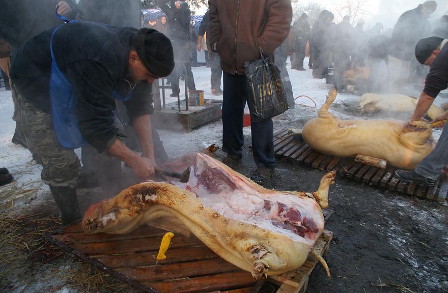 Фестиваль-конкурс різників свиней