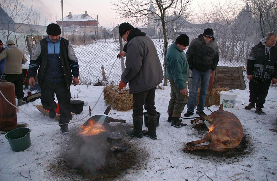 Обпалювання свиней