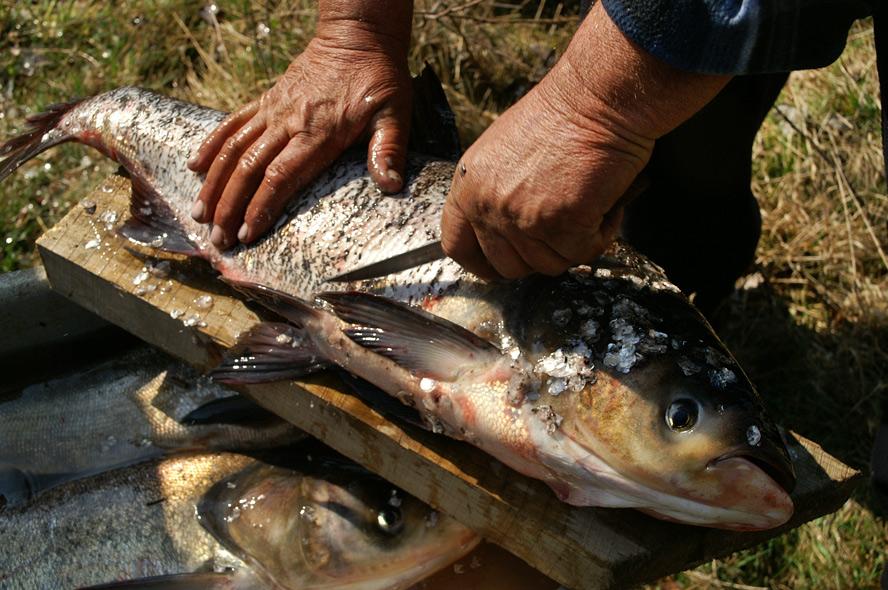 Фестиваль риболовів та угорської ухи