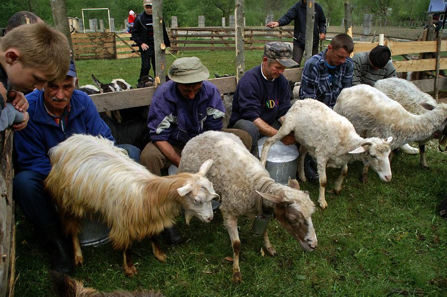 Проводи вівчарів на Боржавські полонини