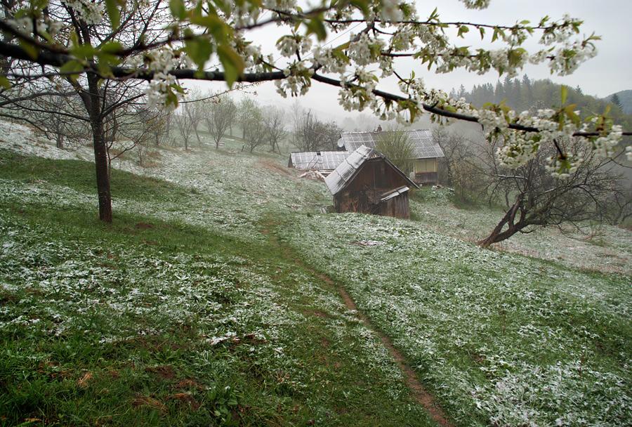 Буковинська весна