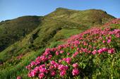 Квітковий тур Гуцульськими Альпами