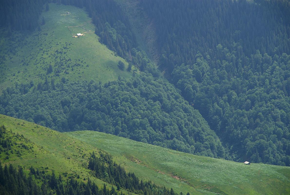 Полонина на схилах гори Рипа - 1710 м (Румунія)