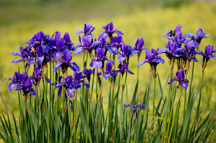 Флора Кримських гір