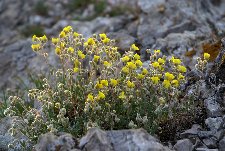 Квіти Криму
