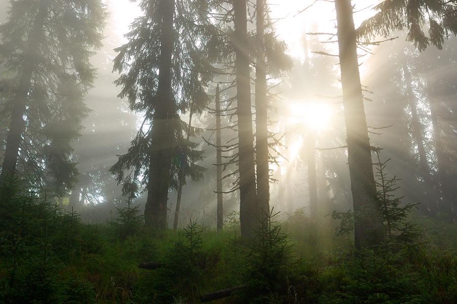 Ранок в Мармароському лісі