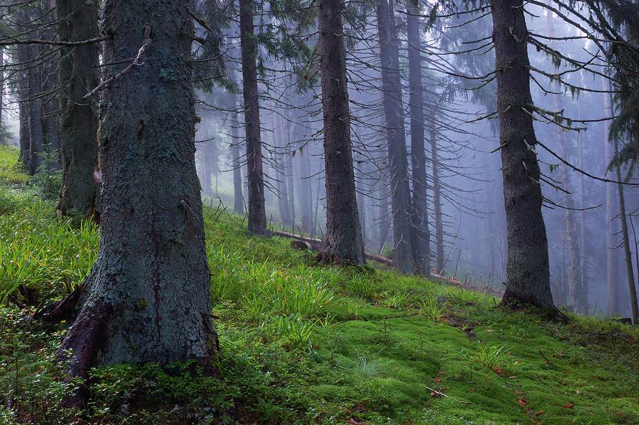 Ліс в Мармароських горах