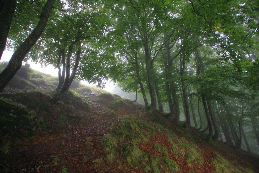 Свидовецький ліс