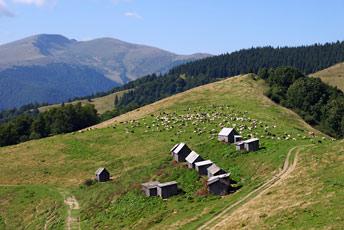 Полонина Мінчіль - 1238 м над р.м.