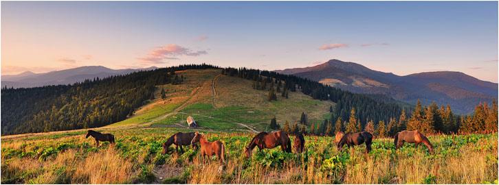 Вид з гори Щавник на гору Вихід з Чорногорою на задньому плані