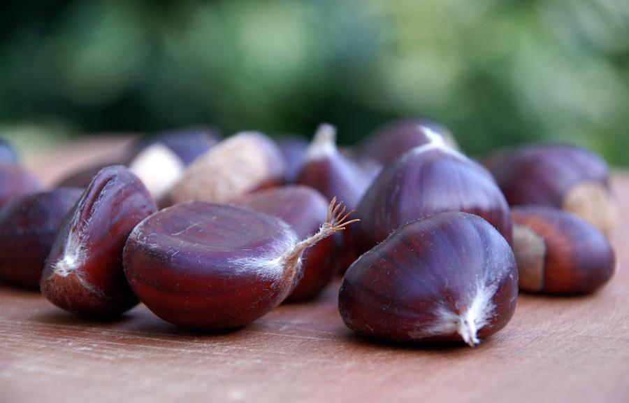 Дозрілі плоди каштану їстівного (Castanea sativa)
