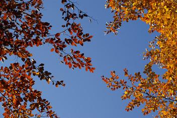 А в небі осінь...