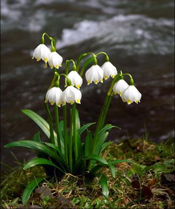 Флора Українських Карпат
