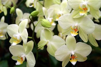 """Виставка орхідей в ботанічному саду """"PalmenGarten"""" (Німеччина)"""