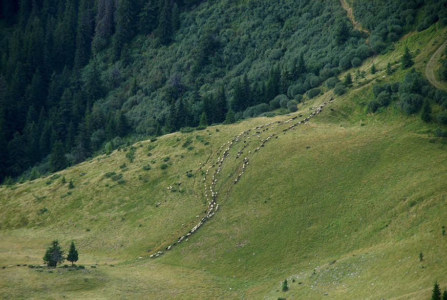 Плай - традиційна пастуша, пішо-кінна стежка